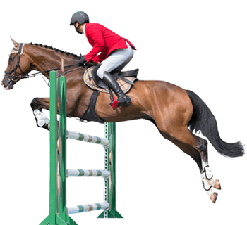the horses from horse betting software databases racing horse jump