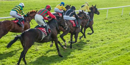 Horses Runing
